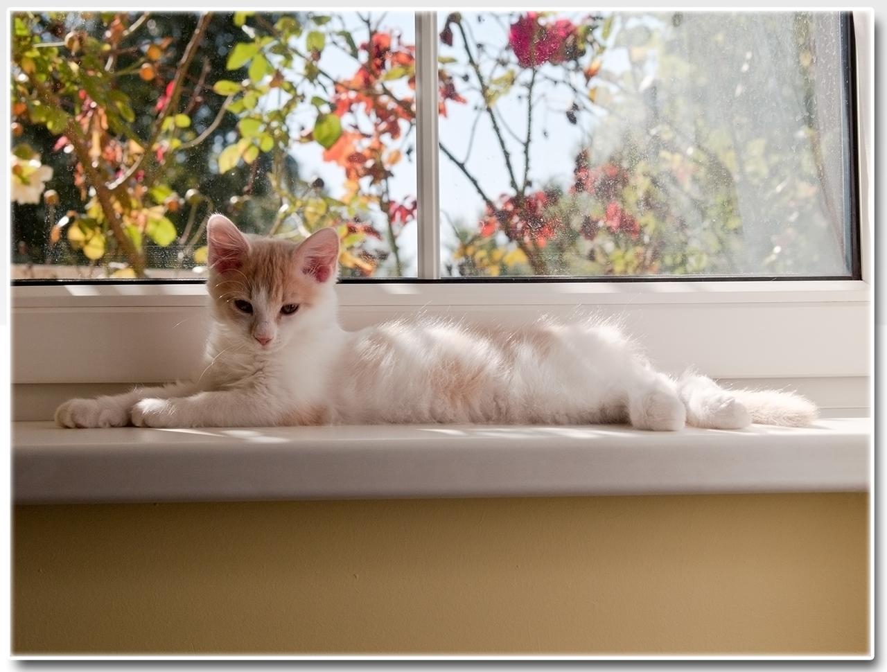 Kedvencem volt ez a Kicsi Cica