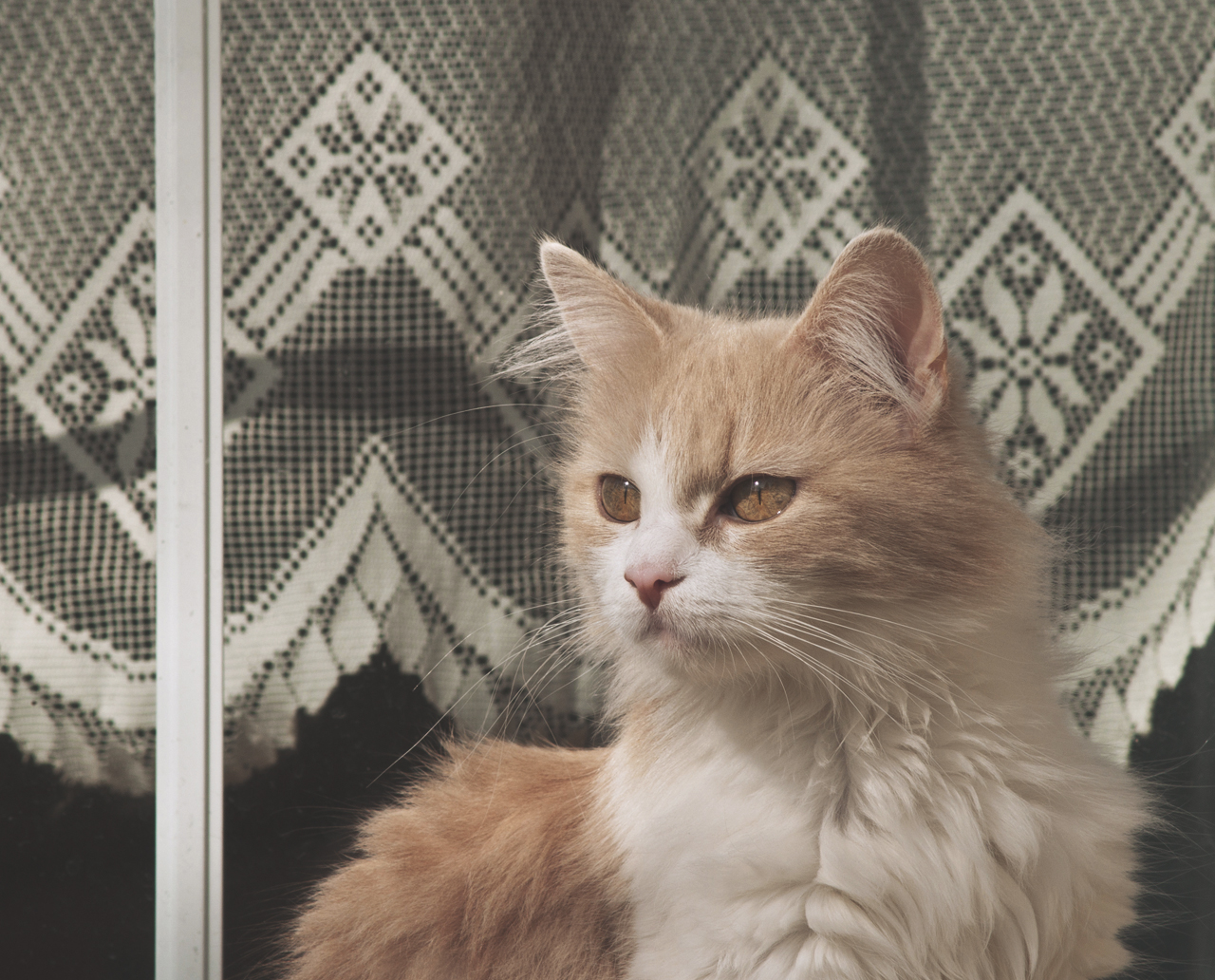 Pufi Cica