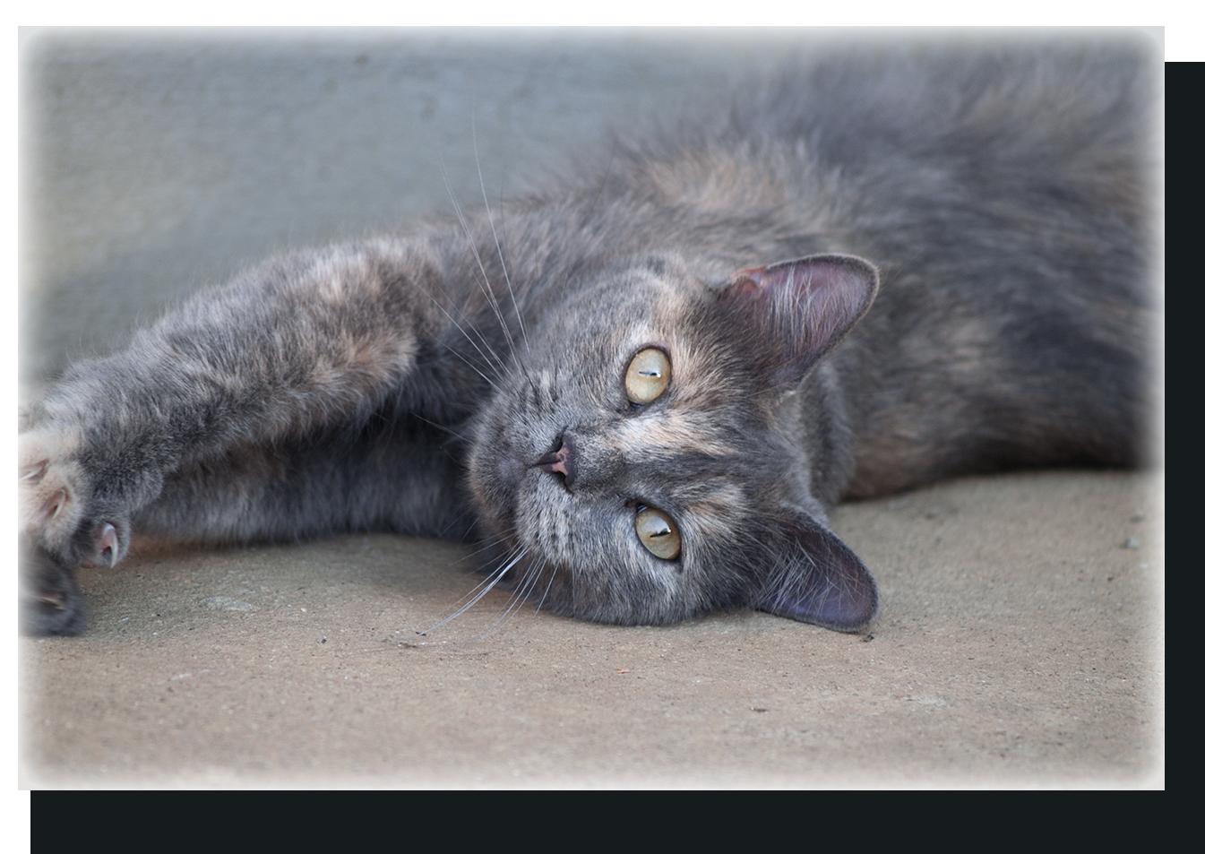 Hamu Cica