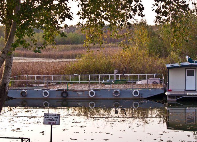 Tisza-tó, Komp